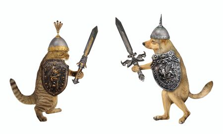 The dog and the cat are armed with shields with a dragon and inlaid swords. They are fighting each other. White background. Isolated.