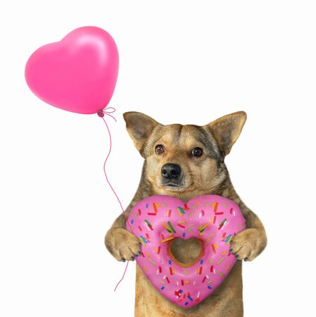 The beige dog is holding a heart shaped donut and a pink balloon. White background. Isolated.