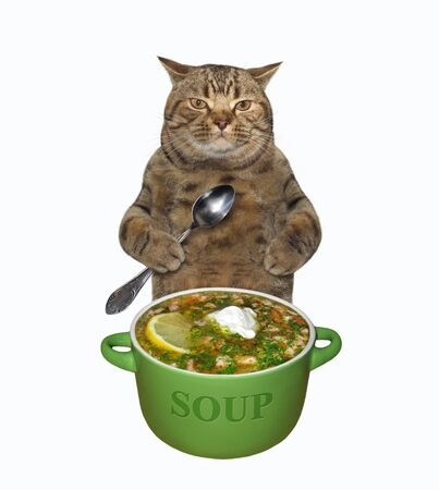The beige cat with a spoon is eating a fresh soup from a green bowl. White background. Isolated.