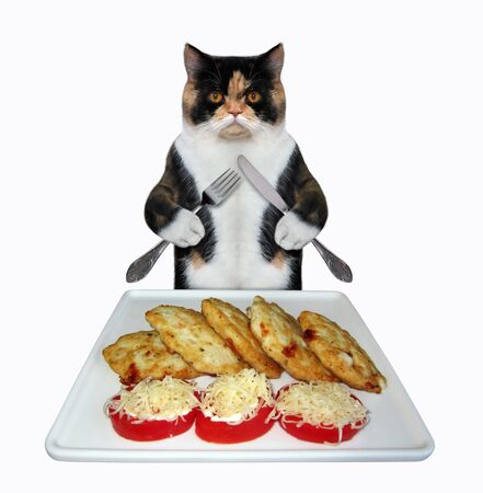 The multi colored cat with a knife and a fork is eating fried cutlets and tomatoes sprinkled with cheese from a square plate. White background. Isolated.