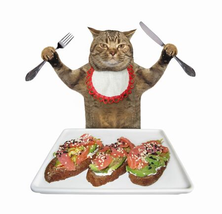The beige cat in a neck napkin with a knife and a fork is eating open sandwiches with salmon and avocado from a square plate. White background. Isolated.