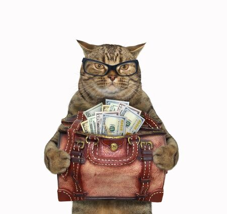The beige cat in glasses is holding a leather bag full of usa dollars. White background. Isolated.