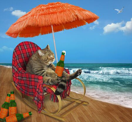 The beige cat in rocking chair is drinking beer under the straw umbrella on a wooden seafront.