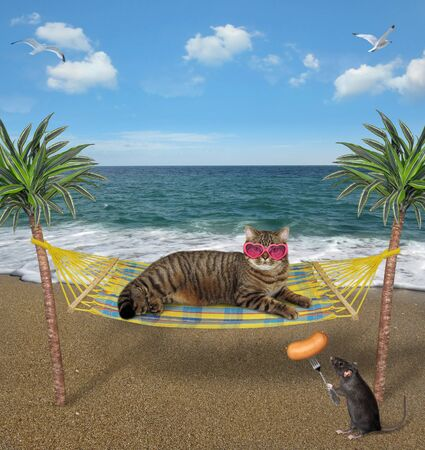 The beige cat in heart shaped sunglasses is resting in a hammock on a tropical beach. A black rat feeds him a sausage on a fork. 版權商用圖片
