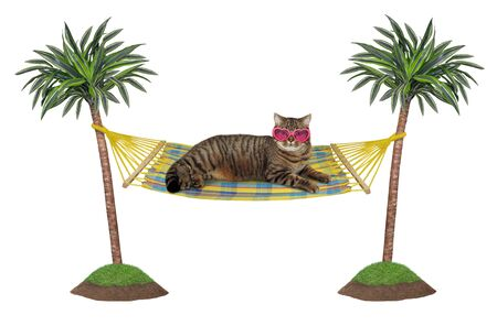 The beige cat in heart shaped pink sunglasses is resting in a hammock between palm trees. White background. Isolated. 版權商用圖片