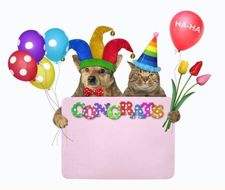 The dog in a jester hat and the cat in a birthday cap are holding a pink paper blank poster, flowers and multi-colored balloons. Congrats. White background. Isolated. Stock Photo