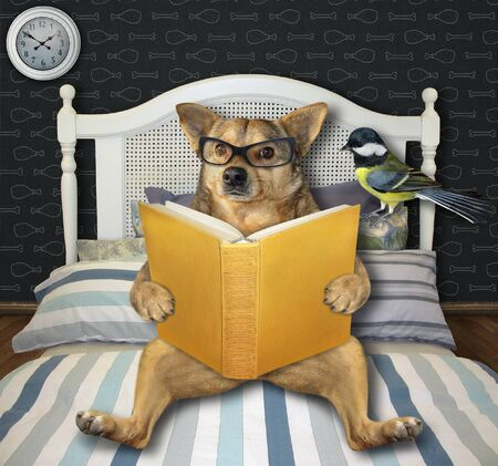 The beige dog in glasses with a open book lies in bed at home. His bird is next to him.