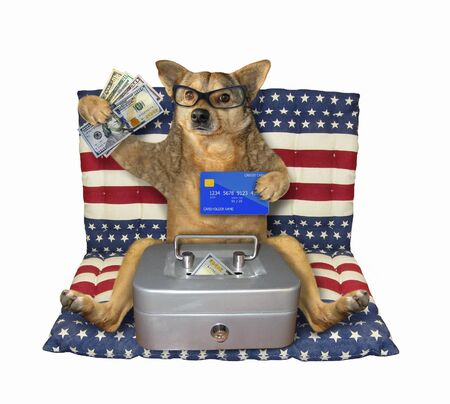 The beige dog patriot in glasses is sitting with a credit card and a metal safe of usa dollars on an american air bed. White background. Isolated. Archivio Fotografico