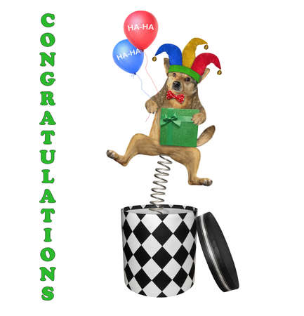 The beige dog  in a jester hat and a red bow tie with colorful balloons is jumping out of a round gift box. Congratulations. White background. Isolated.