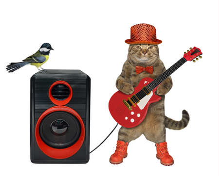 The beige cat musician in stylish clothes is playing a red acoustic guitar and singing a song. The loudspeaker with a bird is next to him. White background. Isolated.