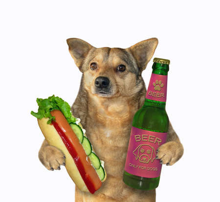 The beige dog is holding a bottle of beer and a big hot dog. White background. Isolated.