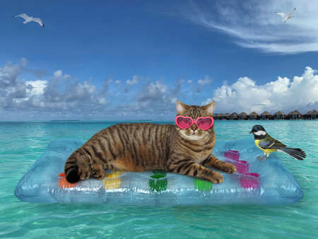 The beige cat in pink heart shaped sunglasses is relaxing on a blue air bed in the sea in the Maldives. A bird is sitting next to him.