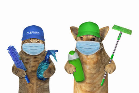 The dog and the cat in surgical protective face masks are cleaners holding sanitizers. Coronavirus. Quarantine White background. Isolated.