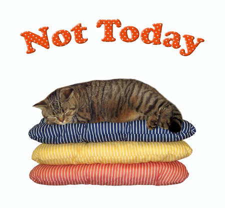 The beige cat is sleeping on three pillows. Not today. White background. Isolated.
