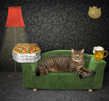 The beige cat is lying on a stylish green couch at home. A tv remote control, a mug of beer and boxes with pizza are next to him.