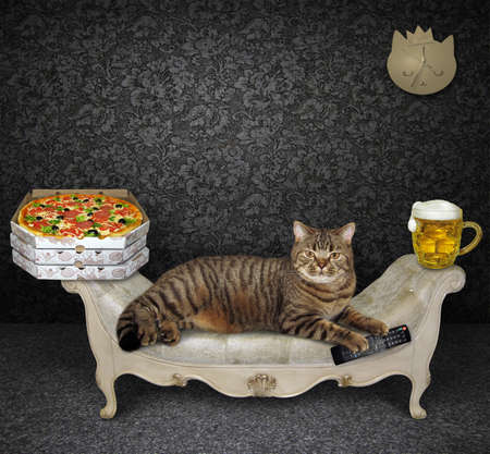 The beige cat is lying on a stylish gray couch at home. A tv remote control, a mug of beer and boxes with pizza are next to him.
