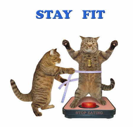 The beige cat in a gold fishbone pendant is standing on a weigh scale. Another cat is measuring this cat's waist by measure tape after a diet. Stay fit. Stop eating. White background. Isolated. Reklamní fotografie