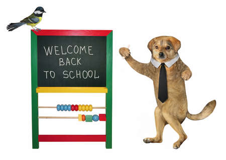 The beige dog teacher in a black tie is standing near the blackboard with inscription welcome back to school. White background. Isolated.