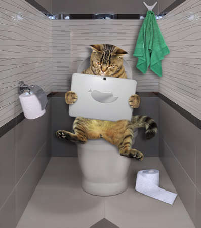 The beige cat is sitting on a white toilet bowl and watching a laptop in the bathroom.