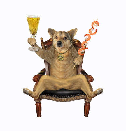 The beige dog is sitting in the antique wooden armchair and drinking wine with shrimp. White background. Isolated.