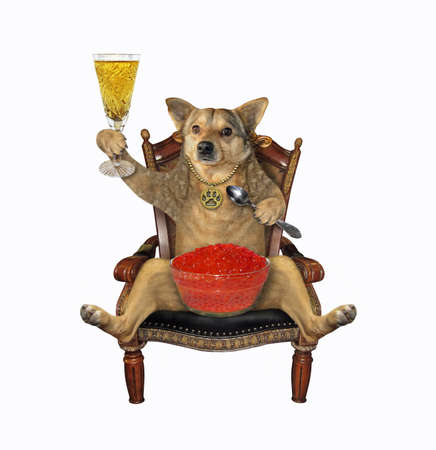 The beige dog is sitting in the antique wooden armchair and drinking wine with red salmon caviar. White background. Isolated. Reklamní fotografie