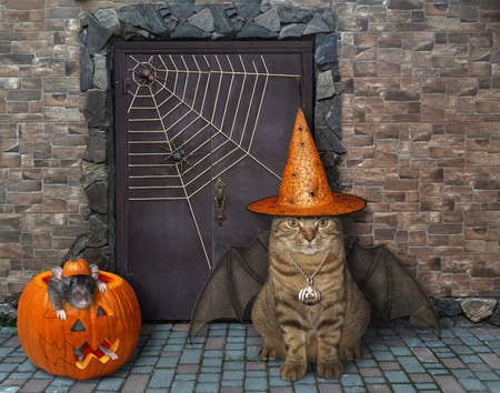 The beige cat in a witch hat with bat wings and the black rat inside a pumpkin are guarding the door of an old castle for Halloween. Reklamní fotografie