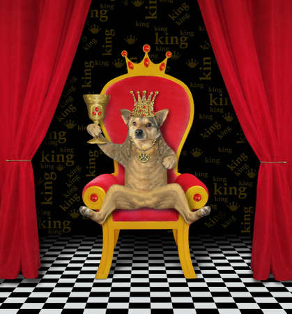 The beige dog king in a golden crown is sitting in the red throne and drinking wine from a goblet with rubies. White background. Isolated.