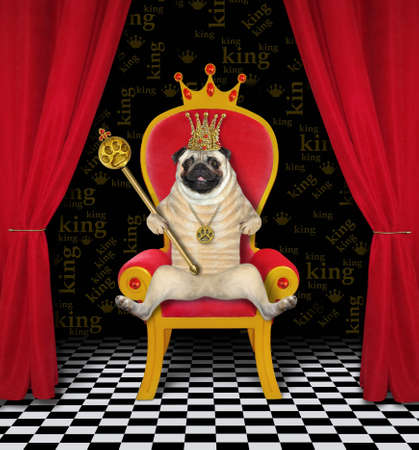 The pug dog king in a golden crown is sitting in the red throne and holding a royal scepter with rubies. Banque d'images