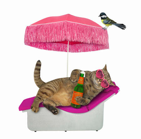 The beige cat in pink heart shaped sunglasses is lying on a beach lounger and drinking beer under a straw umbrella. A bird is next to him. White background. Isolated. Reklamní fotografie