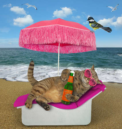 The beige cat in pink heart shaped sunglasses is lying on a beach lounger and drinking beer under a straw umbrella on the beach of the sea. A bird is next to him.