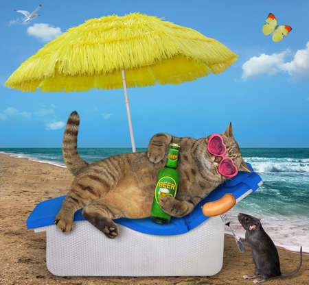 The beige cat in pink heart shaped sunglasses is lying on a beach lounger and drinking beer under a straw yellow umbrella on the beach of the sea. A black rat gives him a sausage.
