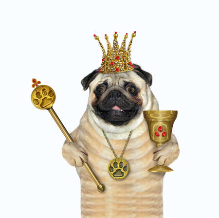 The pug dog king in a crown with a gold paw print pendant is holding a goblet with rubies and a royal scepter. White background. Isolated. Banque d'images