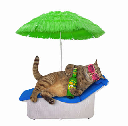 The beige cat in pink heart shaped sunglasses is lying on a beach lounger and drinking beer under a green straw umbrella. White background. Isolated.