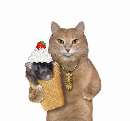 The beige cat with a gold fish bone pendant holds a waffle cup for ice cream with a black rat with whipped cream and a strawberry on its head inside of it. White background. Isolated.