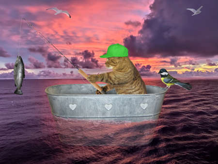 The beige cat in a green cap is drifting in a washtub and fishing on the open sea against the background of a red sunset. He cought a big fish. A bird is next to him.