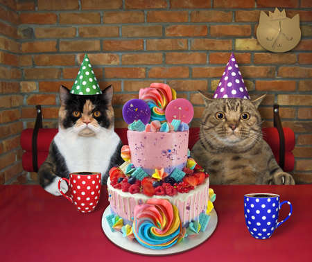 The couple of cat in party hats are eating a holiday two tiered cake and drinking black coffee at a table in a restaurant.