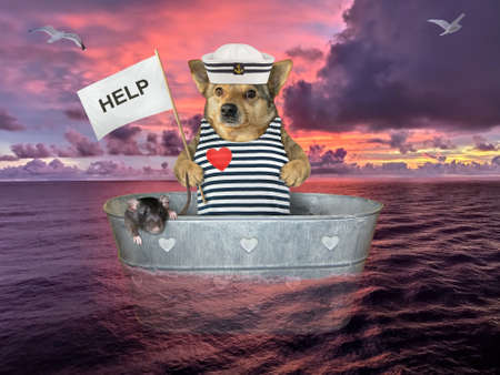 The dog in sailor clothing with a his black rat is drifting in a washtub on the open sea after shipwreck. He holds a sign that says sos.