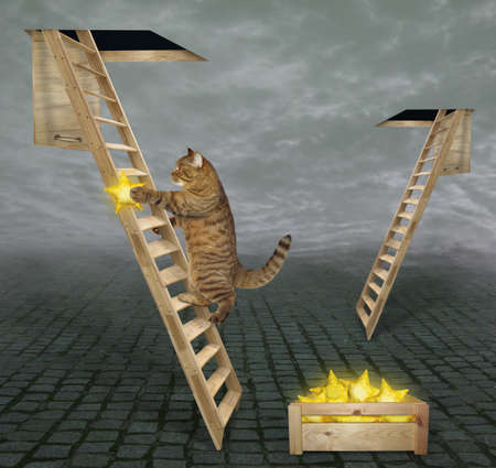 A beige cat with a golden star climbs up a wooden ladder to the sky through a hole in the clouds.