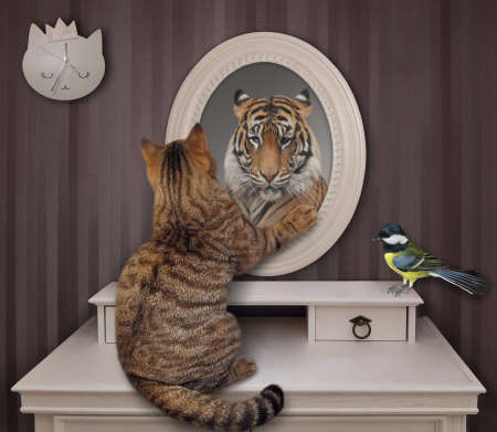 The biege cat stares his reflection in the mirror at home. He sees a tiger there. A bird is next to him.