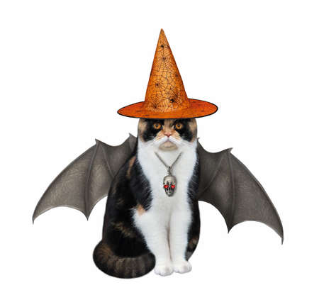 A multi colored cat with bat wings is wearing a witch hat and a skull shaped pendant for Halloween. White background. Isolated.