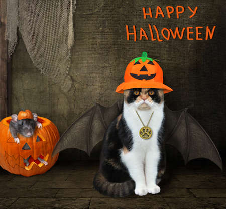 A cat in a witch hat with bat wings is sitting in an old barn. A black rat is inside a pumpkin. Happy Halloween. 写真素材