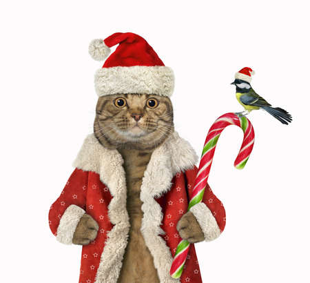 A beige big eyed cat Santa Claus holds a Christmas candy cane. White background. Isolated.