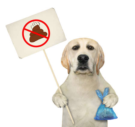 A dog holds a blue plastic bag with poop and a prohibition sign that says clean up after pets. White background. Isolated.