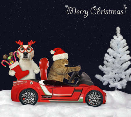 A cat in a Santa Claus hat drives a red car with a dog that holds a Christmas boot in the night forest. Merry Christmas.