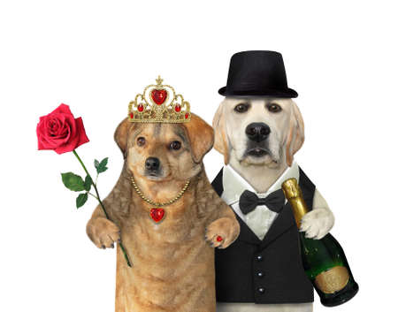 A couple of dogs in love are having fun. White background. Isolated.