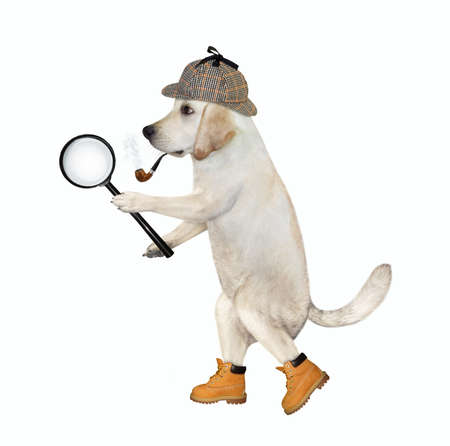 A dog detective in a plaid hat and shoes is holding a big magnifying glass. White background. Isolated.