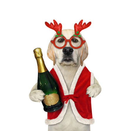 A dog in a Santa Claus clothing holds a big bottle of wine. White background. Isolated.