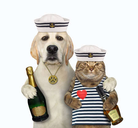A dog sailor with a bottle of wine hugs a cat with rum. White background. Isolated. Stock Photo