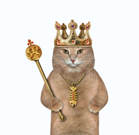 A beige cat in a crown is holding a gold royal scepter. White background. Isolated. Stock Photo