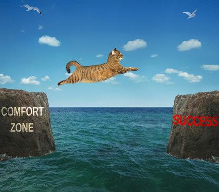 A brave cat jumps over the strait. Comfort zone - success. Positive motivation.